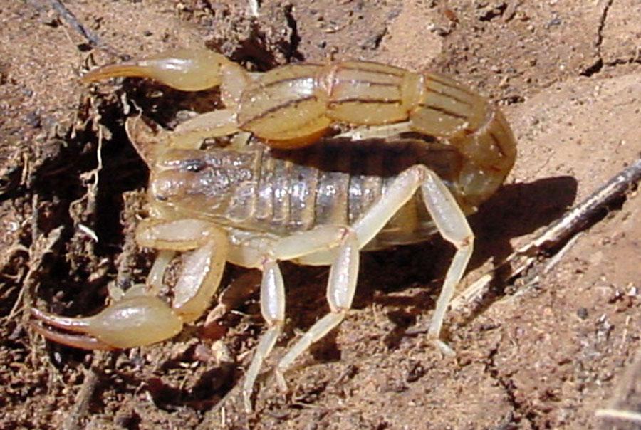 фото прозрачных скорпионов четвероногий друг обязательно